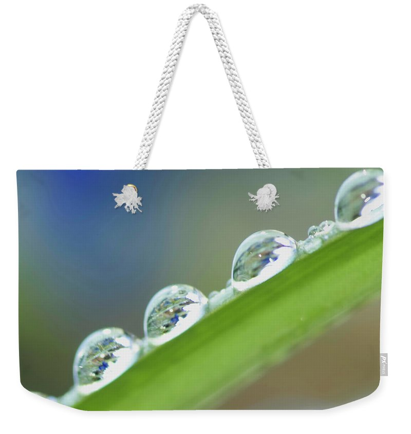 Drop Weekender Tote Bag featuring the photograph Morning Dew Drops by Heiko Koehrer-Wagner