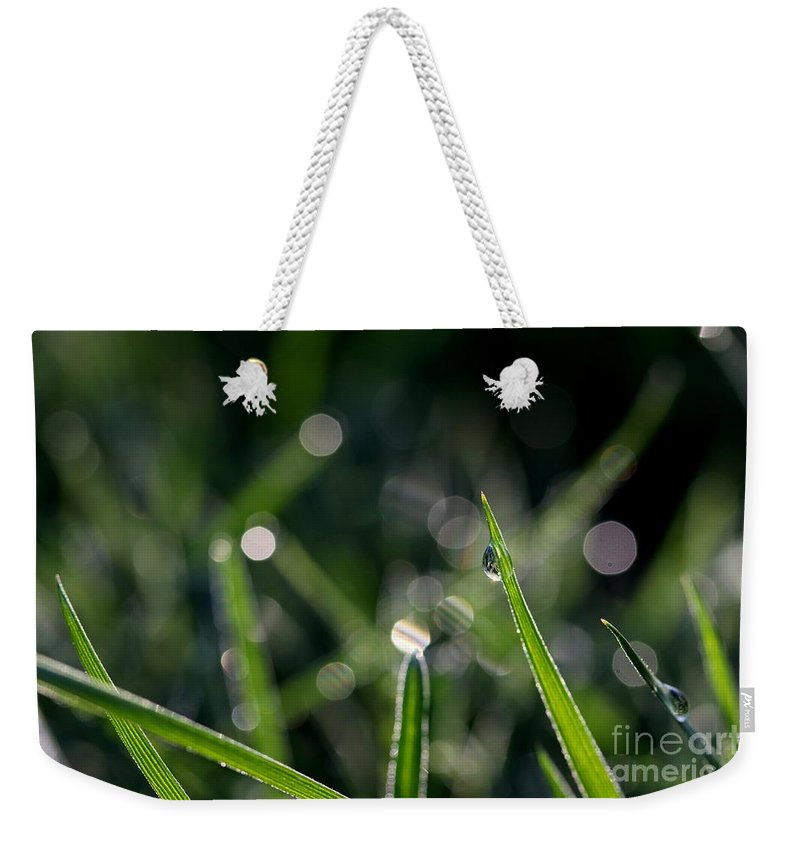 Dew Weekender Tote Bag featuring the photograph Morning Dew by Kenny Glotfelty