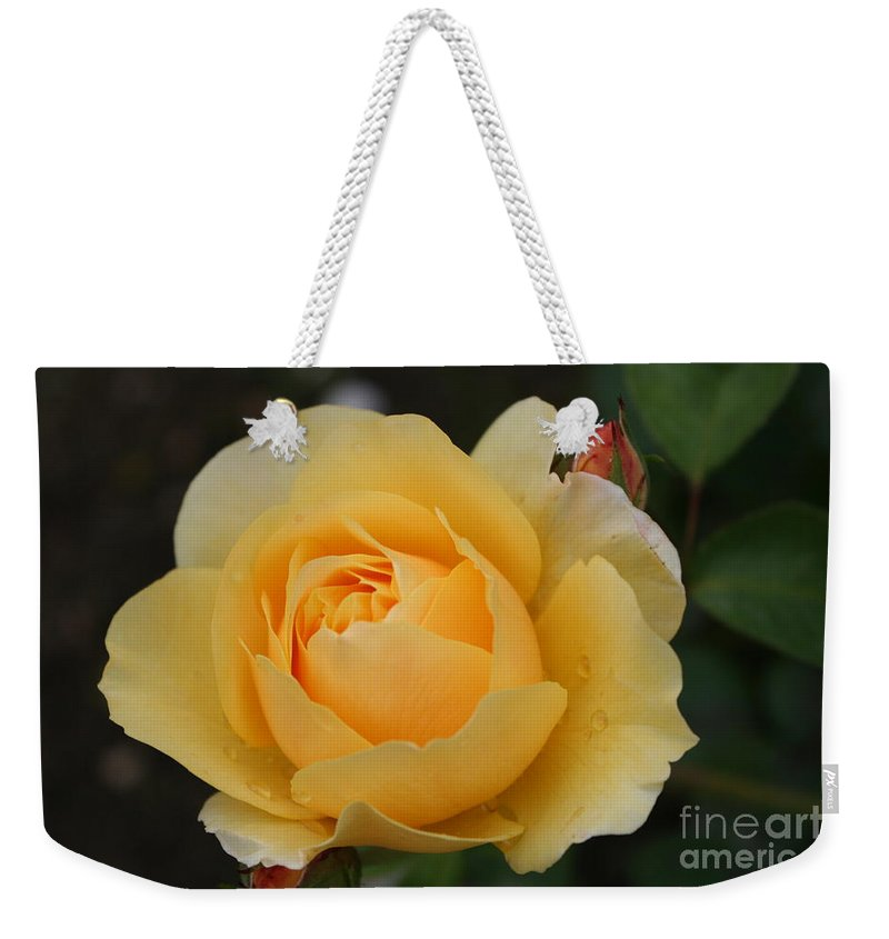 Rose Weekender Tote Bag featuring the photograph Morning Dew Rose by Christiane Schulze Art And Photography