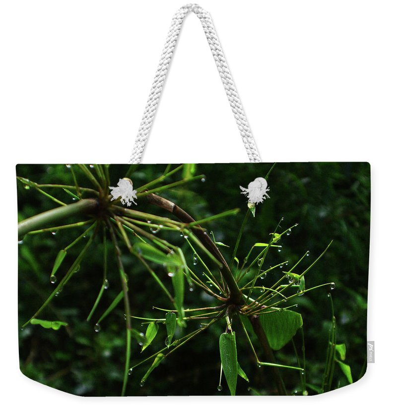 Dew Weekender Tote Bag featuring the photograph Morning Dews by Xueling Zou