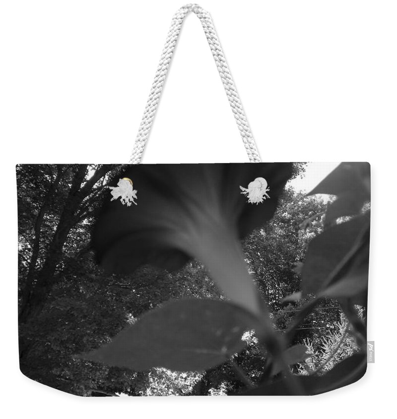 Morning Glory Weekender Tote Bag featuring the photograph Morning Glory 07 by Thomas Woolworth