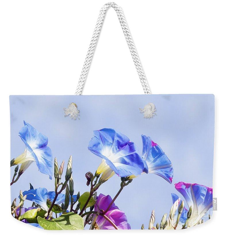 Gabriele Pomykaj Weekender Tote Bag featuring the photograph Morning Glory Flowers by Gabriele Pomykaj