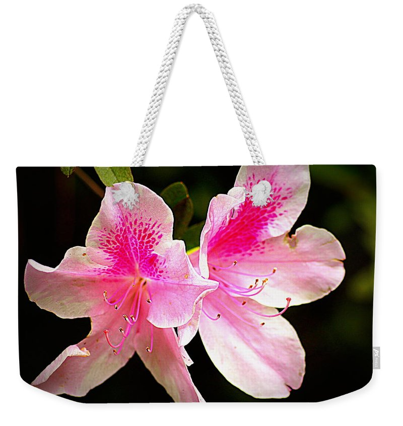 Flower Weekender Tote Bag featuring the photograph Morning Glory by Paul Wilford
