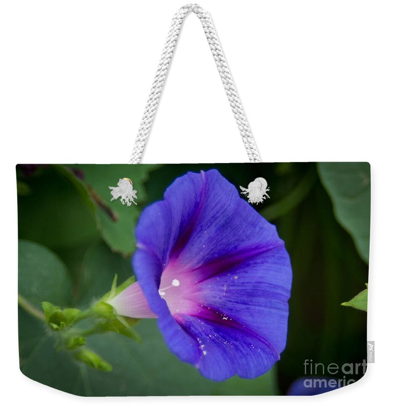 Morning Weekender Tote Bag featuring the photograph Morning Glory by Scott Hervieux