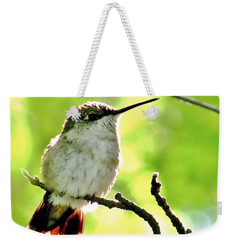 Hummingbird Weekender Tote Bag featuring the photograph Morning Surprise by Marilyn Smith