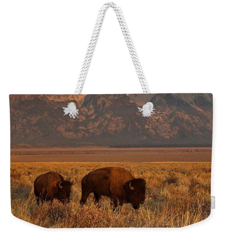 Bison Weekender Tote Bags