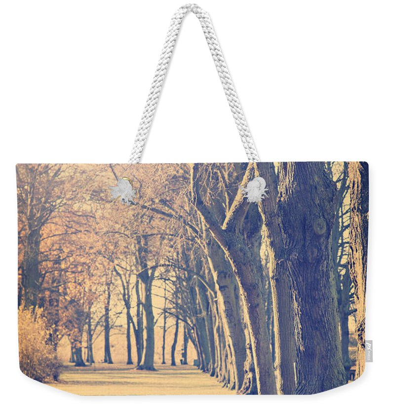 Forest Weekender Tote Bag featuring the photograph Morning Trees by Sophie McAulay