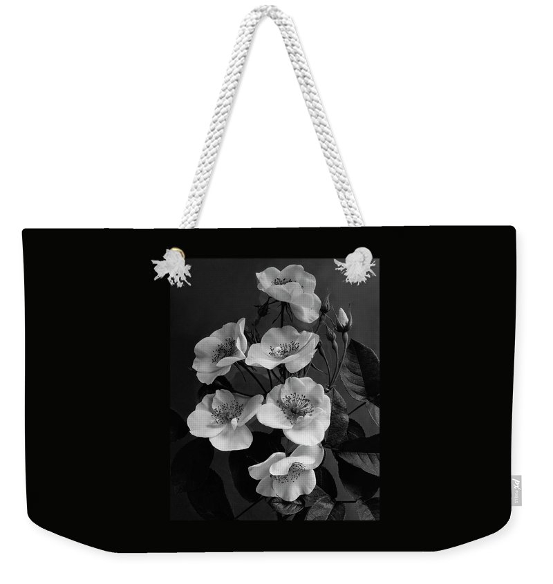 Flowers Weekender Tote Bag featuring the photograph Moschata Alba by J. Horace McFarland