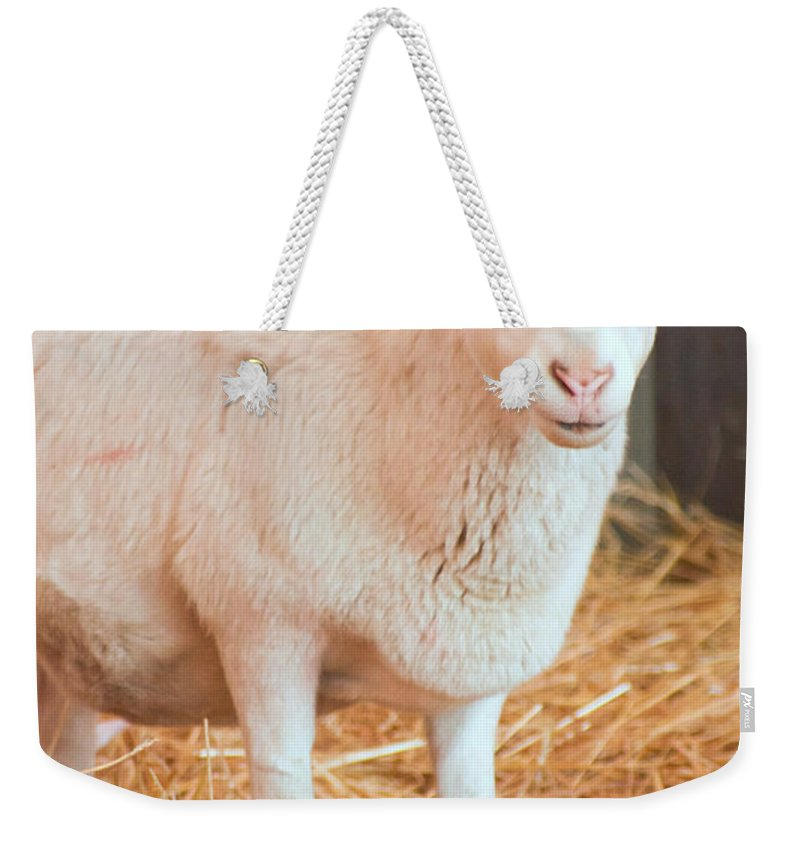 Mother And Child Weekender Tote Bag featuring the photograph Mother And Child by Photographic Arts And Design Studio