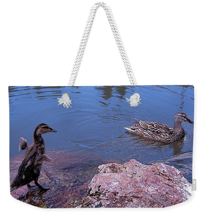 Mallard Weekender Tote Bag featuring the photograph Mother And Child by Rona Black
