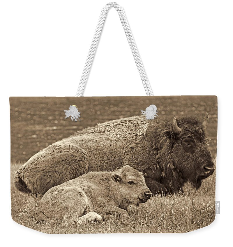 Buffalo Weekender Tote Bag featuring the photograph Mother Buffalo And Calf Sepia by Jennie Marie Schell