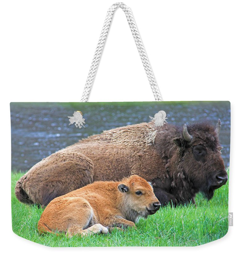 Buffalo Weekender Tote Bag featuring the photograph Mother Buffalo And Calf Yellowstone by Jennie Marie Schell