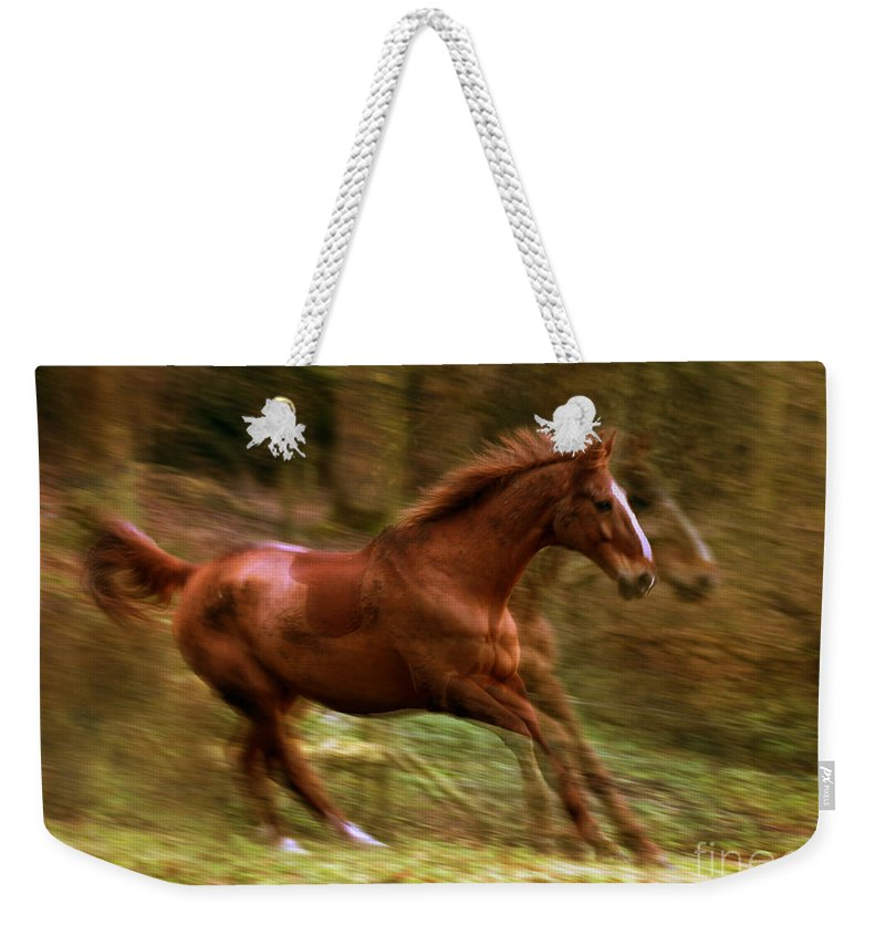 Horse Weekender Tote Bag featuring the photograph Motion Picture by Angel Ciesniarska