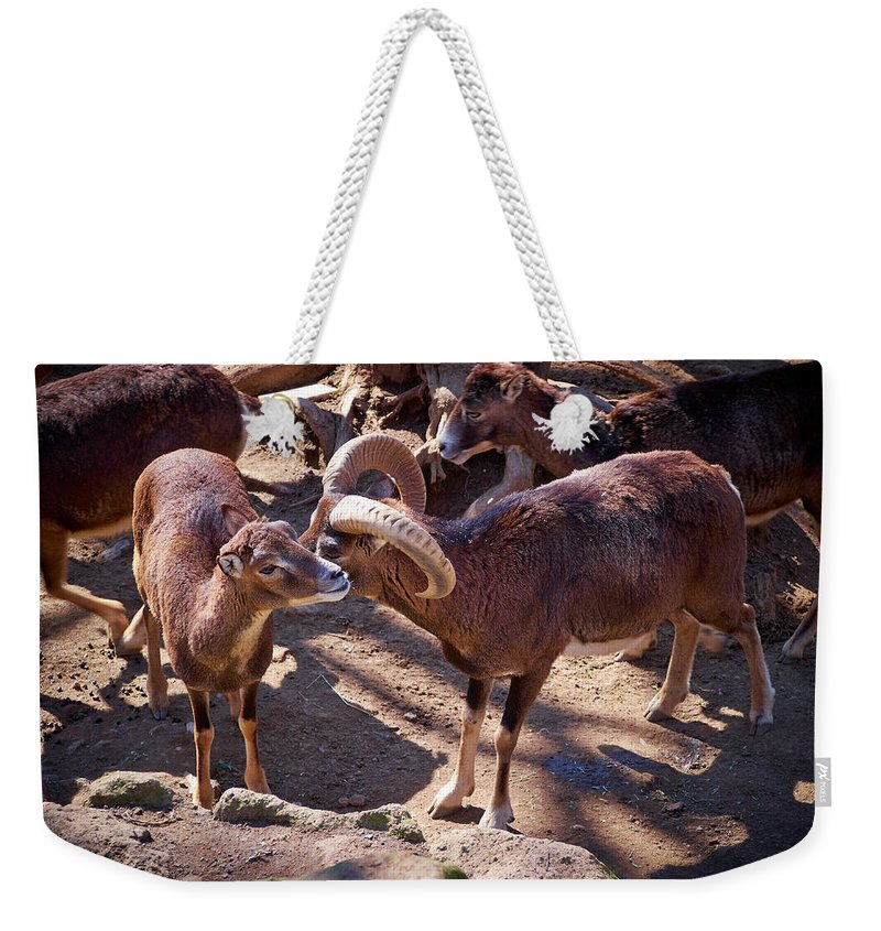 2013. Weekender Tote Bag featuring the photograph Mouflon by Jouko Lehto