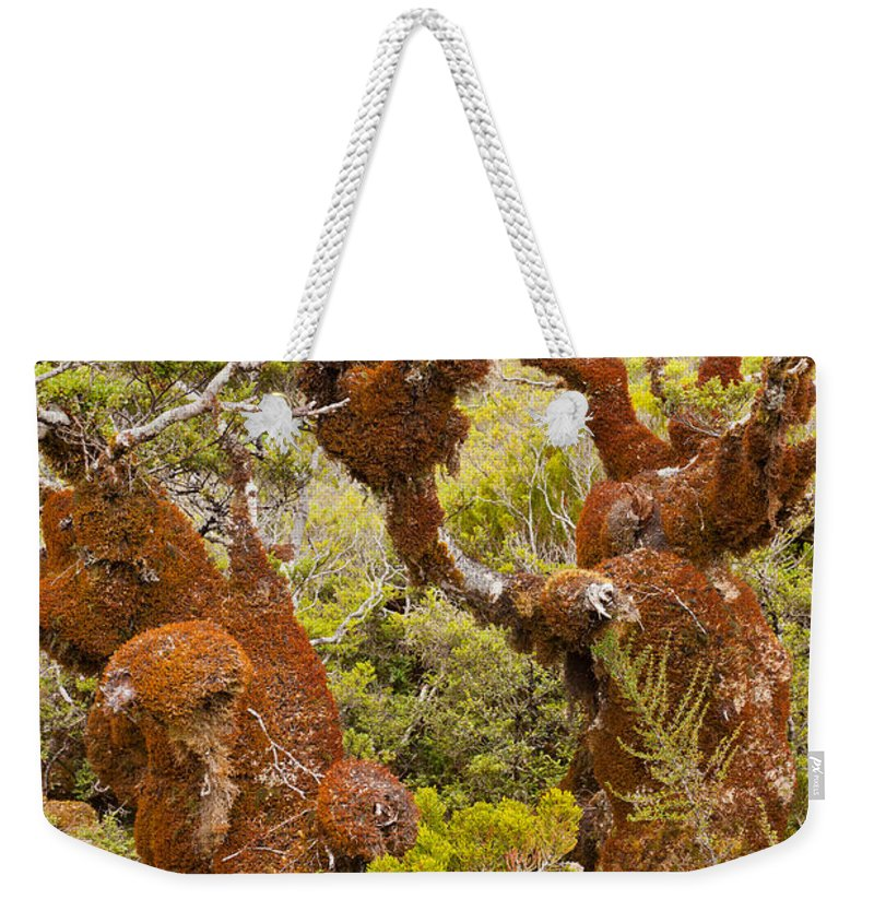 South Island Weekender Tote Bag featuring the photograph Mountain Beech Rain Forest In Fjordland Np Nz by Stephan Pietzko