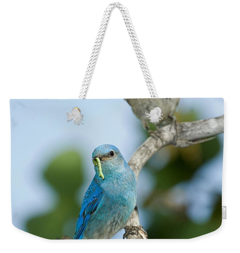 Fauna Weekender Tote Bag featuring the photograph Mountain Bluebird Pair by Anthony Mercieca