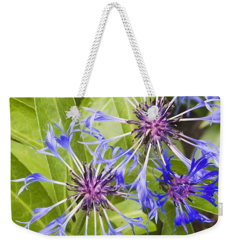 Flower Weekender Tote Bag featuring the photograph Mountain Bluet Flowers by Keith Webber Jr