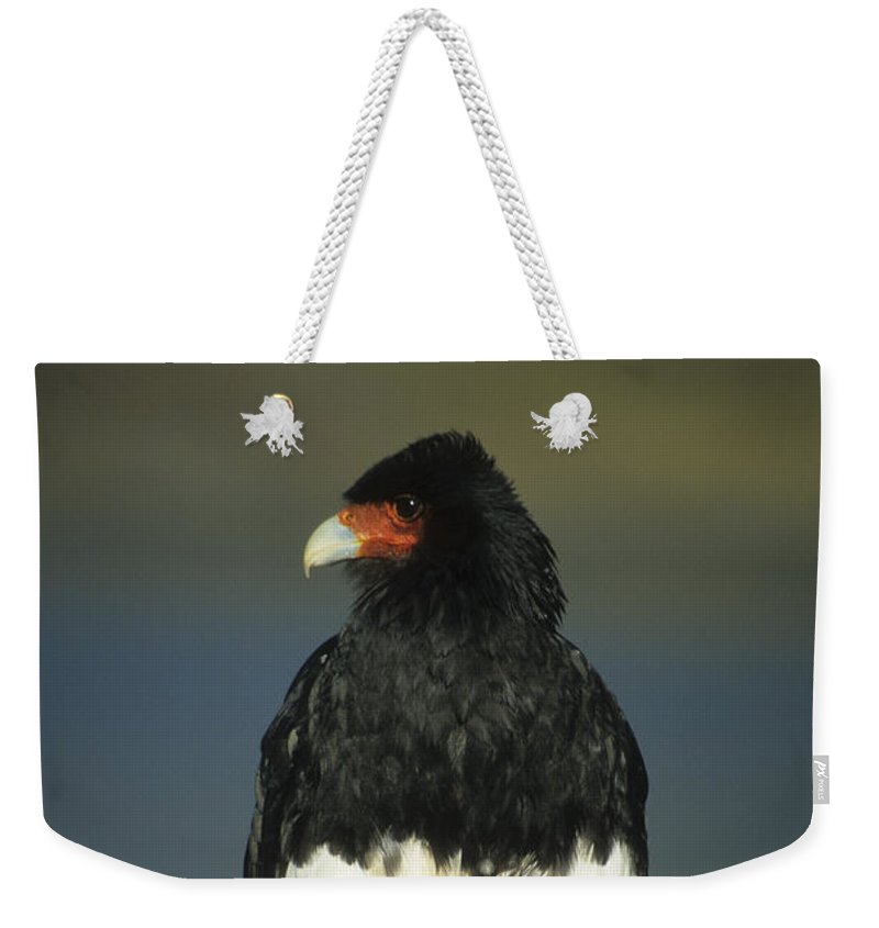 Bird Weekender Tote Bag featuring the photograph Mountain Caracara by James Brunker