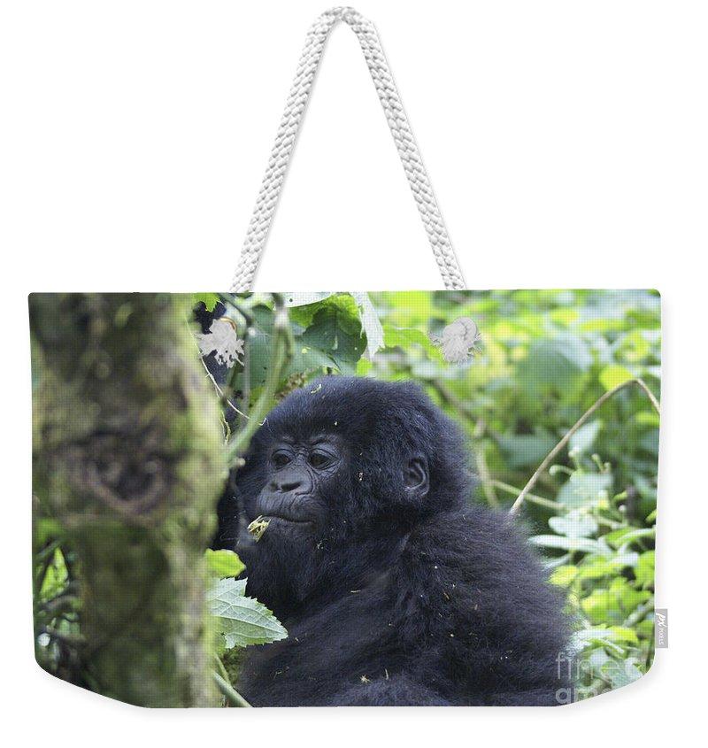 Mountain Gorilla Weekender Tote Bag featuring the photograph Mountain Gorillas by Ruth Hofshi