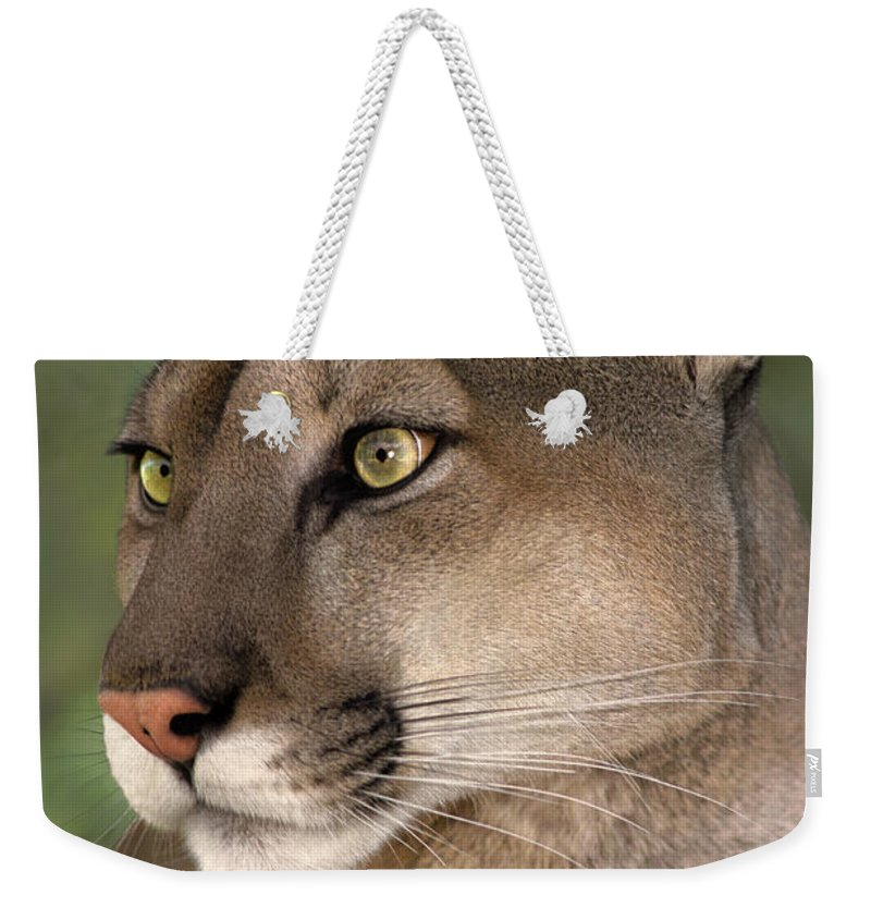 Mountain Lion Weekender Tote Bag featuring the photograph Mountain Lion Portrait Wildlife Rescue by Dave Welling