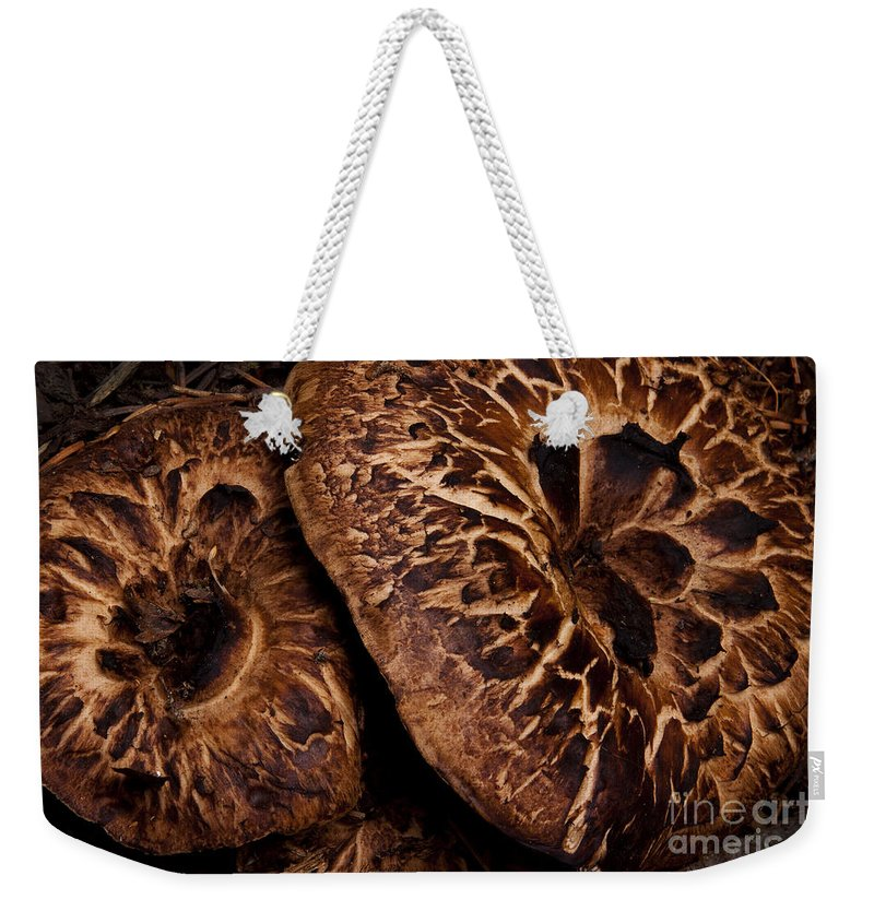 Mountain Mushrooms Weekender Tote Bag featuring the photograph Mountain Mushrooms  #3670 by J L Woody Wooden