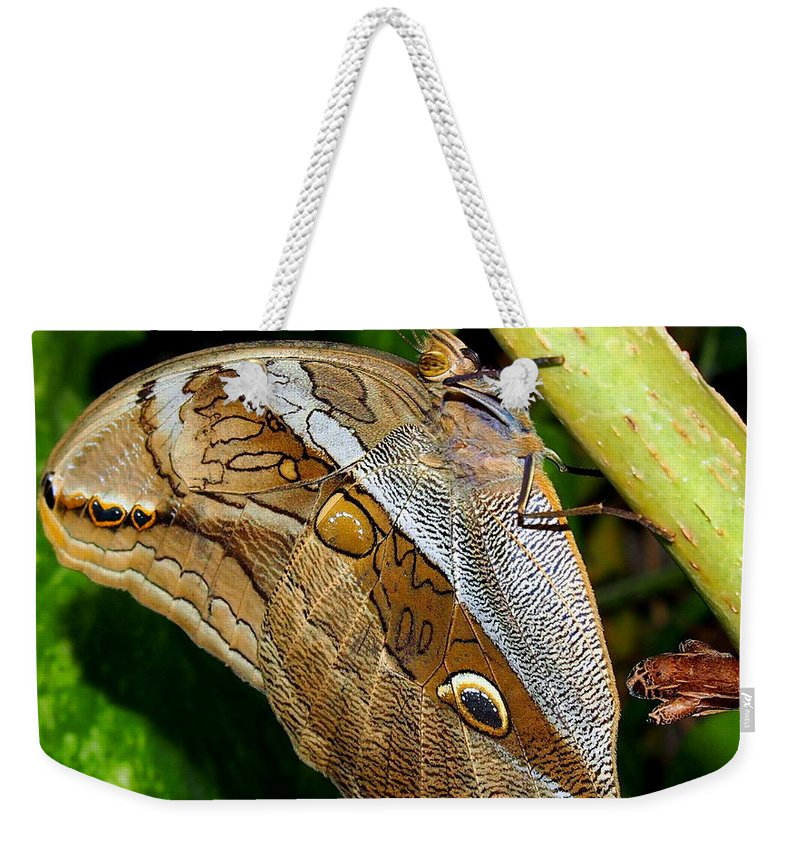 Nature Weekender Tote Bag featuring the photograph Mournful Owl Butterfly by Amy McDaniel