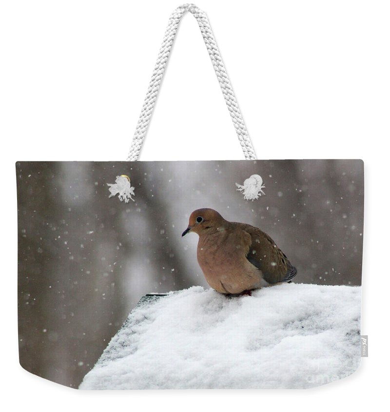 Mourning Dove Weekender Tote Bag featuring the photograph Mourning Dove In Snow by Karen Adams