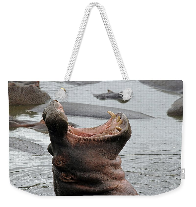 Hippo Weekender Tote Bag featuring the photograph Mouth Wide Open by Tony Murtagh