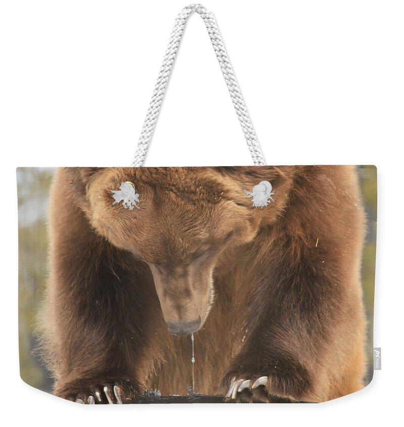 Grizzly Bear Weekender Tote Bag featuring the photograph Mouthwatering by Adam Jewell