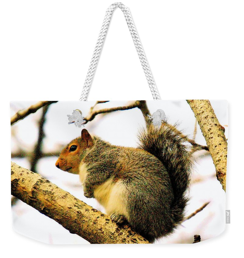 Squirrels Weekender Tote Bag featuring the photograph Mr Fat And Sassy by Jeff Swan