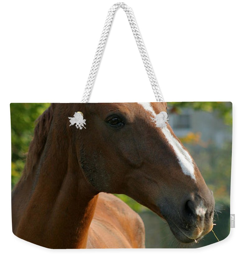 Horse Weekender Tote Bag featuring the photograph Mr Handsome by Angel Ciesniarska