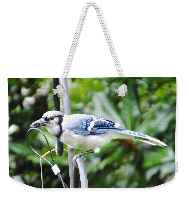 Blue Jay Weekender Tote Bag featuring the photograph Mr Jay by Lizi Beard-Ward