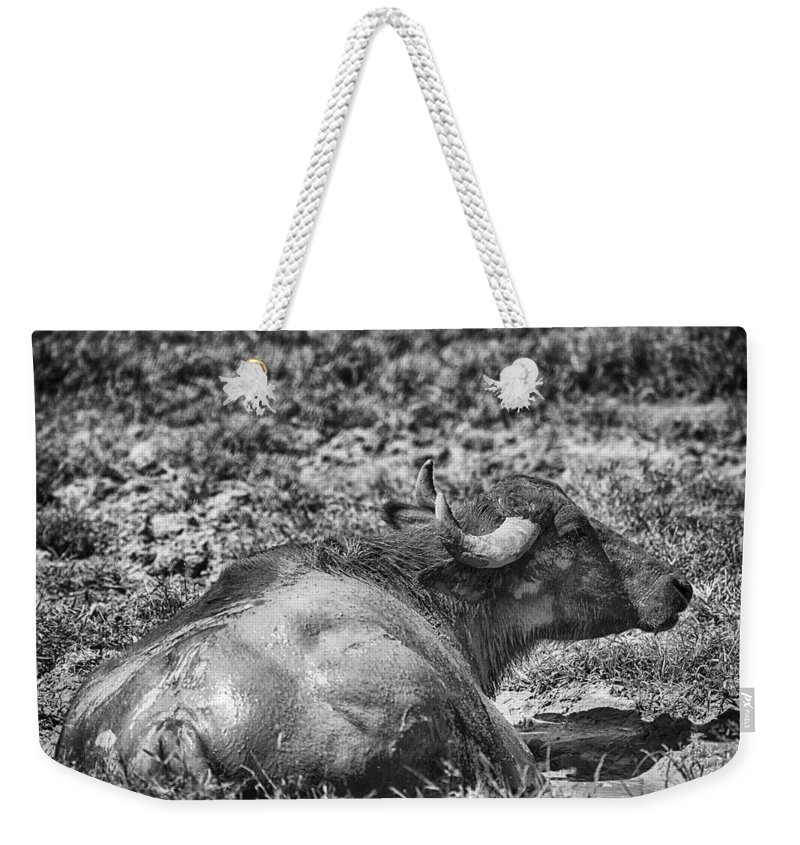 Water Buffalo Weekender Tote Bag featuring the photograph Mudbath-black And White by Douglas Barnard