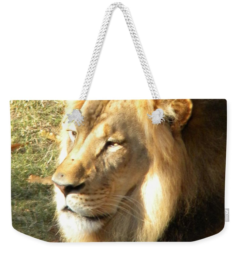 Lion Weekender Tote Bag featuring the photograph Mufasa by Nathanael Smith