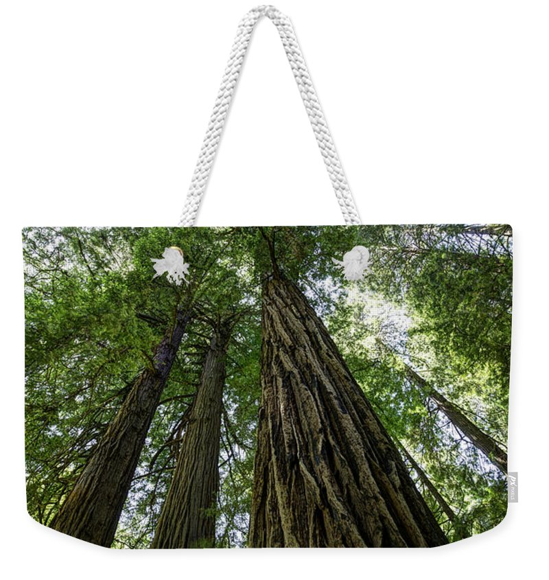 Muir Woods Weekender Tote Bag featuring the photograph Muir Woods I by Mark Harrington