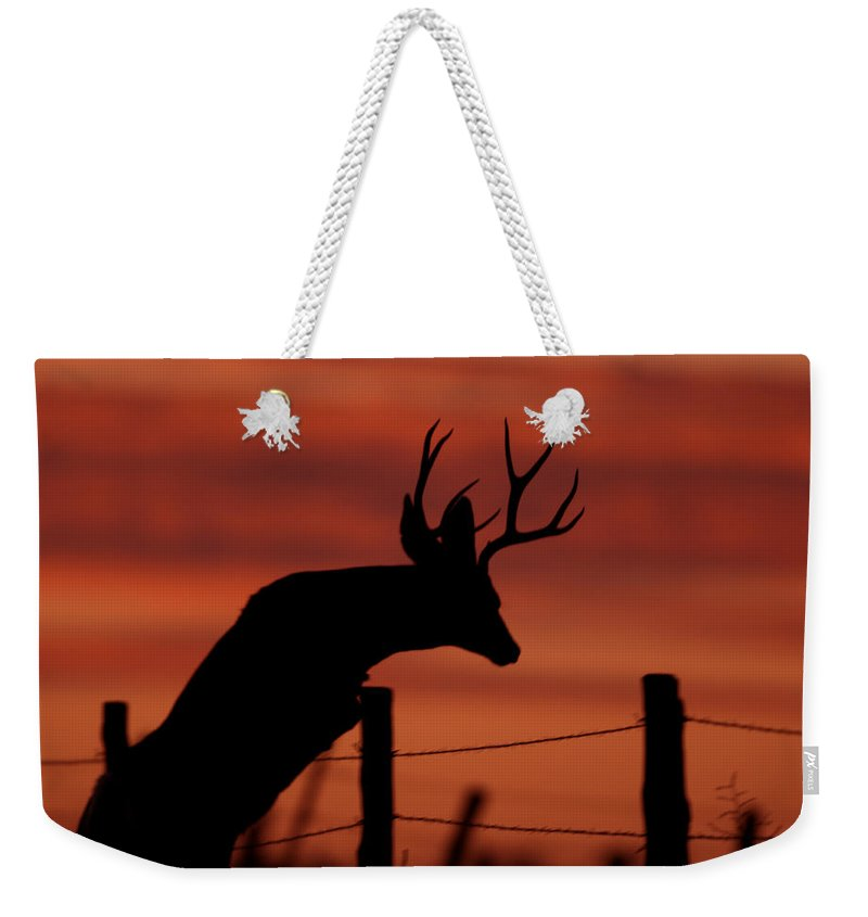 Mule Weekender Tote Bag featuring the photograph Mule Deer Buck Jumping Fence At Sunset by Gary Langley