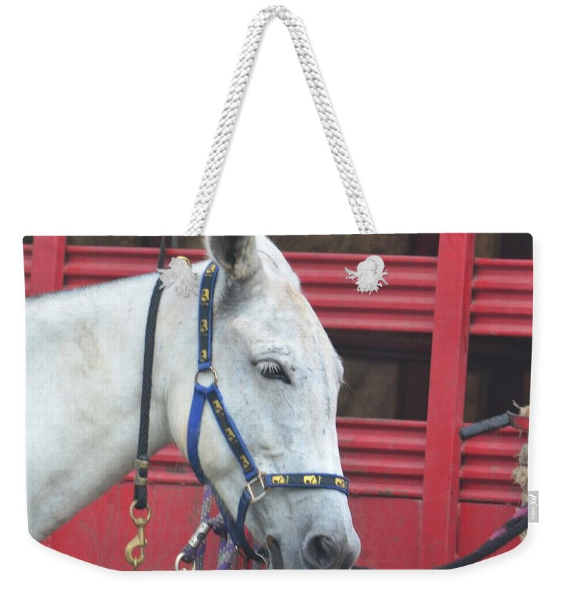 Mule Head Weekender Tote Bag featuring the photograph Mule Head by Maria Urso