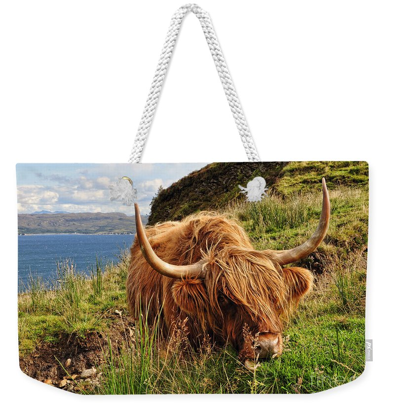 Highland Cow Weekender Tote Bag featuring the photograph Munching Lunch by Bel Menpes