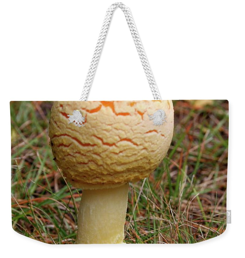 Mushroom Weekender Tote Bag featuring the photograph Mushroom by Christiane Schulze Art And Photography