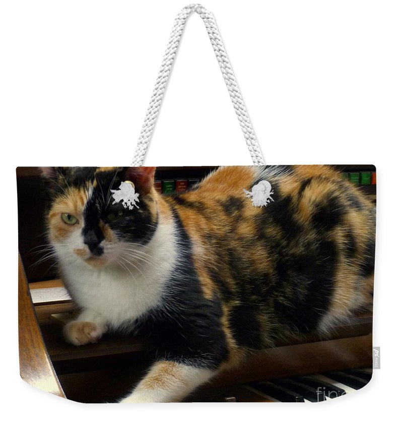 House Pet Weekender Tote Bag featuring the photograph Music Of The Night by Lingfai Leung