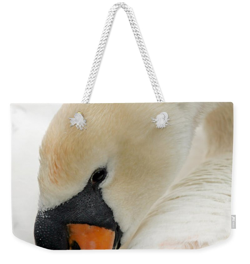 Cygnus Color Weekender Tote Bag featuring the photograph Mute Swan Fine Art Photograph by John Harmon