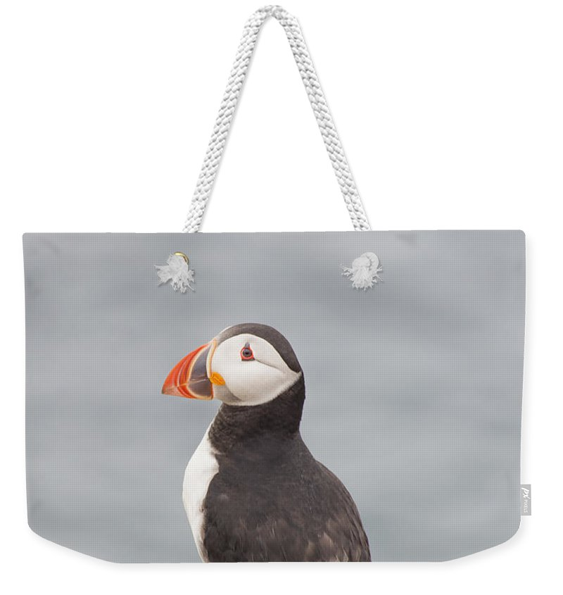 Puffin Weekender Tote Bag featuring the photograph My Feathered Friend by Evelina Kremsdorf