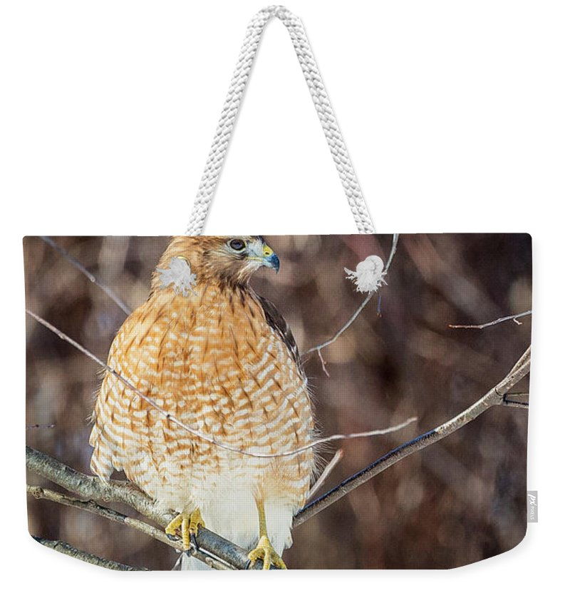 Red Shouldered Hawk Weekender Tote Bag featuring the photograph My Good Side by Bill Wakeley