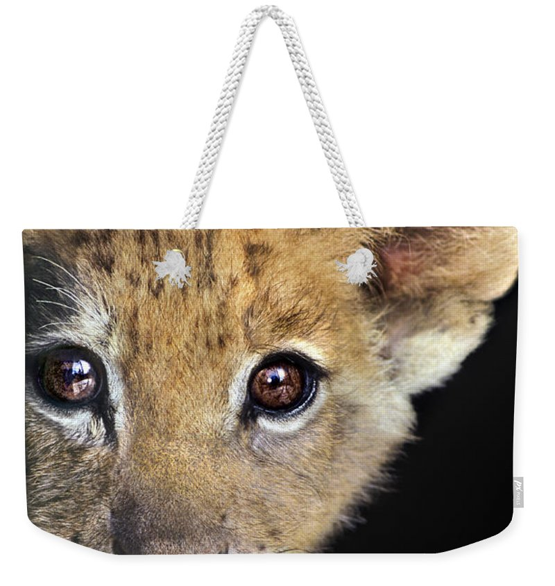 African Lion Weekender Tote Bag featuring the photograph My Grandma What Big Eyes You Have African Lion Cub Wildlife Rescue by Dave Welling