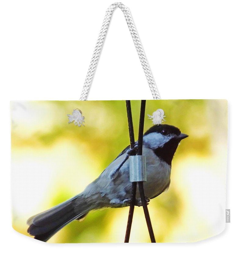 Carolina Chickadee Weekender Tote Bag featuring the photograph My Little Chickadee by Lizi Beard-Ward