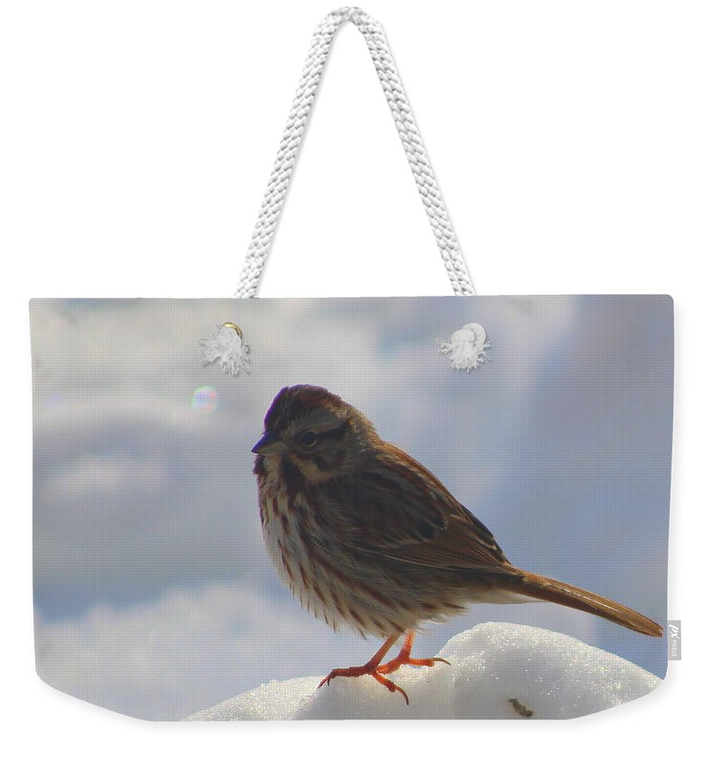 Sparrow Weekender Tote Bag featuring the photograph My Little Sparrow by Dora Sofia Caputo Photographic Design and Fine Art