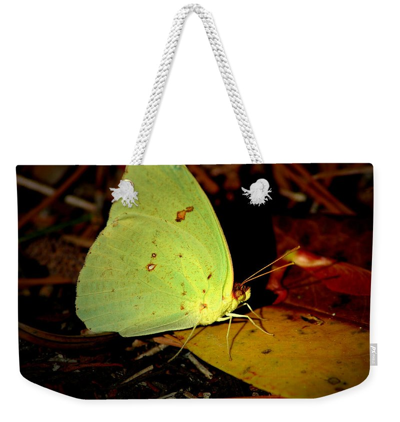 Butterfly Weekender Tote Bag featuring the photograph Mystical World 2 by David Weeks