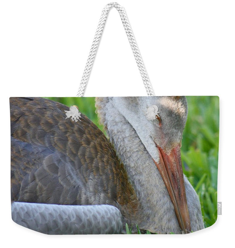 Sandhill Crane Chick Weekender Tote Bag featuring the photograph Napping Sandhill Baby by Carol Groenen