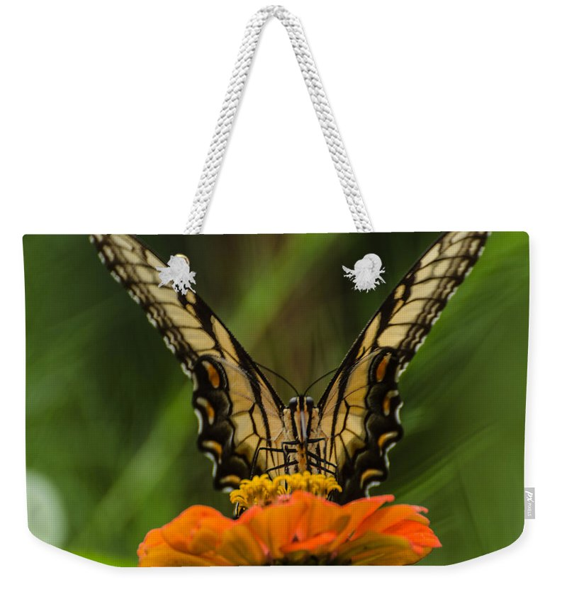Insect Weekender Tote Bag featuring the photograph Nature Stain Glass by Donna Brown