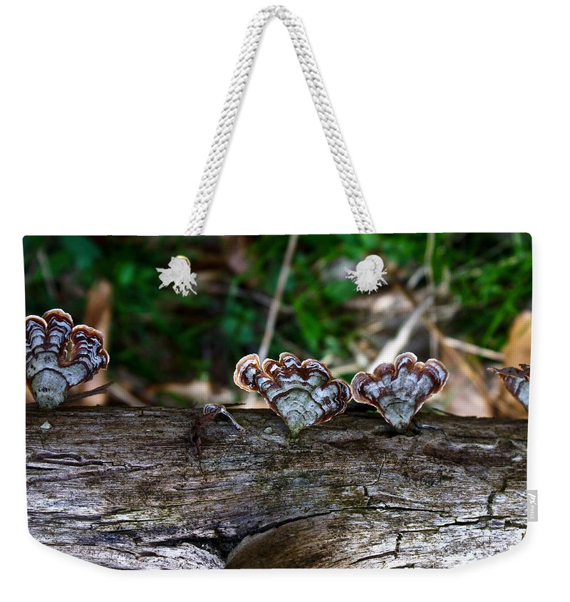Bracket Weekender Tote Bag featuring the photograph Natures Fantasy Fans by Douglas Barnett